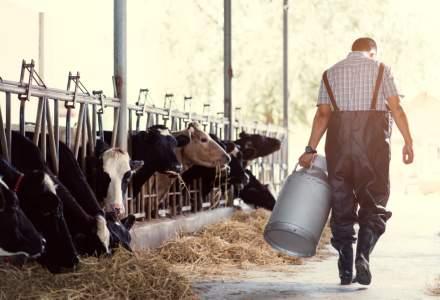 Noi fonduri pentru sustinerea fermierilor in 2019: ce bani vor primi in plus agricultorii