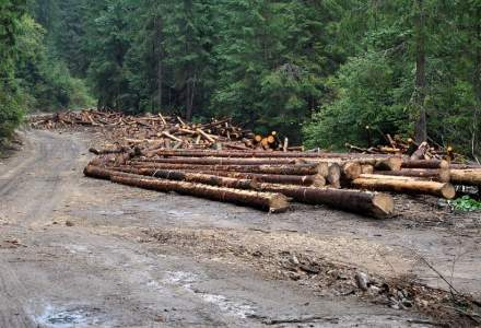 Fordaq: Industria lemnului si industria mobilei sunt intr-o stare de criza