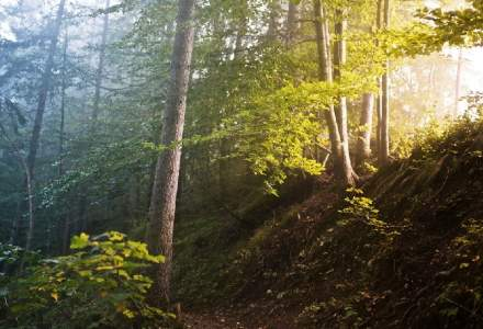 Un padurar roman a delapidat lemn de 2,5 mil. lei