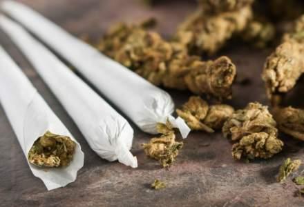 Canabisul continua sa fie cel mai consumat drog din Romania