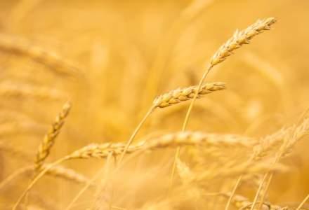 Producatorii agricoli trag un semnal de alarma: Contra-anotimpurile distrug agricultura. Productia va scadea