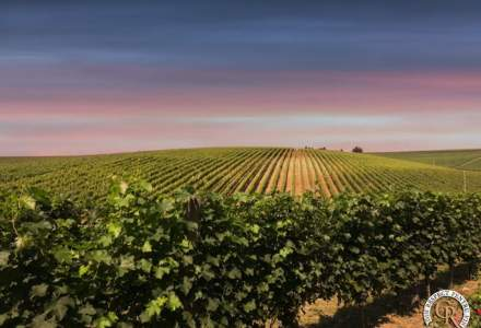Cramele Recas, afaceri de peste 49 milioane euro. Jumatate din vinul produs in Romania merge la export