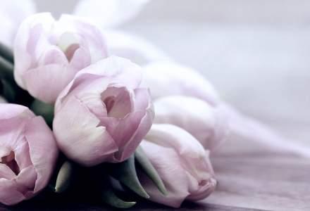 Romanii daruiesc mai multe flori: business-urile din domeniul floral si-au dublat cifra de afaceri in ultimii cinci ani
