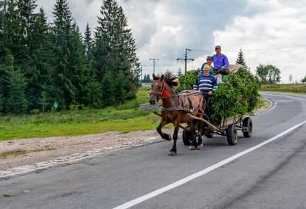 Agricultura românească, ineficientă: predomină fermele de subzistență