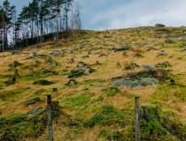 Împădurirea României: OMV...