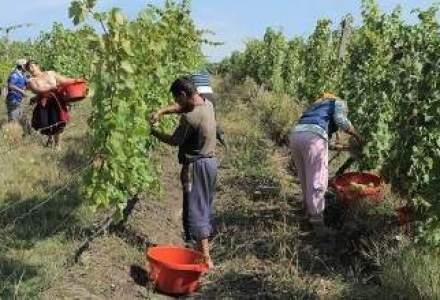 Producatorii de vin, dupa un prim semestru agitat: Efortul depus pentru orice sticla de vin vanduta a fost mare