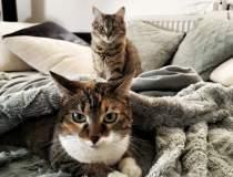 Pisicile se pot infecta cu...