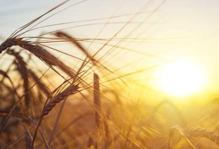 Operator agricol: Interzicerea exporturilor scade artificial prețurile