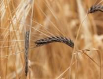 Min. Agriculturii asigură...