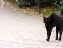 O pisică a fost testată...