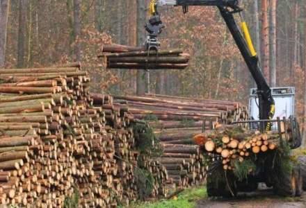 Legea care interzice pe 10 ani exportul de lemn în afara UE, promulgată