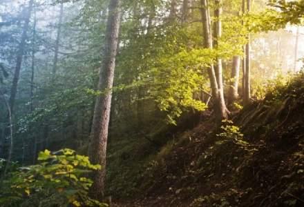 Nu se mai taie lemn din pădurile seculare. Ministrul Mediului anunță că pădurile mai vechi de 140 de ani vor fi protejate