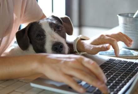 Românii resimt lipsa interacţiunii şi a schimbului de informaţii cu colegii când lucrează de acasă