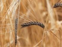 Min. Agriculturii: Producţia...