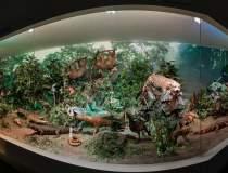 Muzeul Antipa își redeschide...