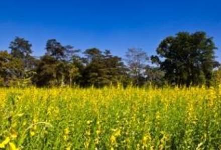 O afacere unica in Europa infloreste in Bihor: fabrica de ulei de canepa