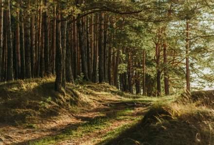 DNA-ul Pădurilor: Senatul a adoptat proiectul de înfiinţare