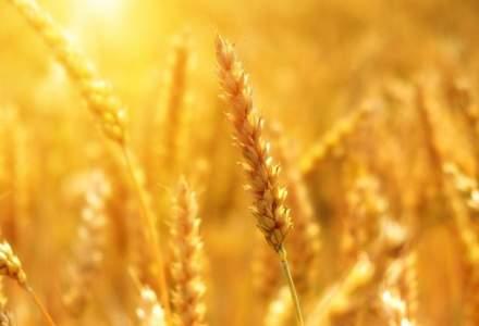 Adrian Oros, ministrul Agriculturii: În urma verificărilor, a reieşit că suprafaţa afectată de secetă a fost de 1.165.000 de hectare
