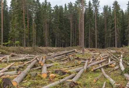 România primește ultimatum de la Comisia Europeană pentru defrișări ilegale