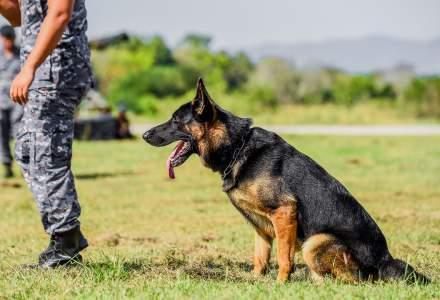 Câini antrenați pentru a depista persoanele cu COVID-19: decizie luată de armata unui stat membru UE
