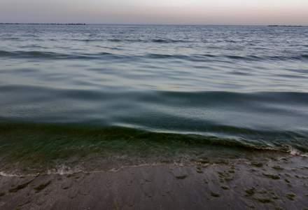 Situație verde pe litoral. Tone de alge au ajuns pe plajă la Mamaia