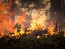 Focare și incendii de...