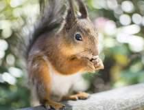 O veveriţă, testată pozitiv...