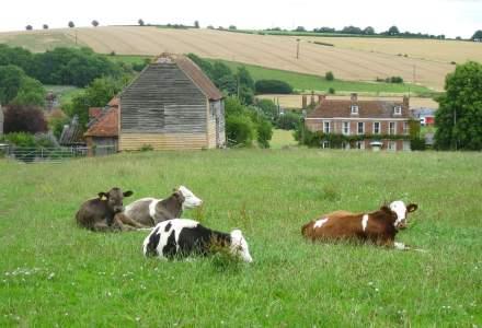 Focar de coronavirus la o fermă din Marea Britanie: 28 de români testați pozitiv