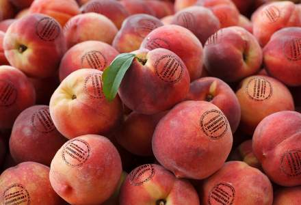 Un startup românesc vrea să revoluționeze igienizarea fructelor și legumelor printr-o bio-etichetă antimicrobiană