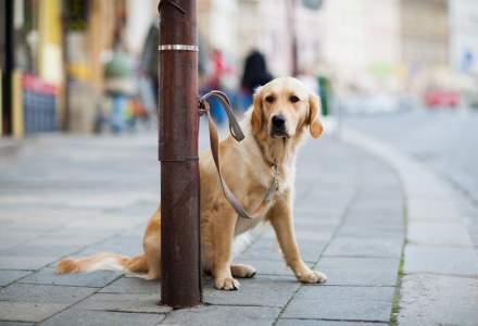 Spaniolii își abandonează acum câinii. În pandemie i-au folosit pentru a ieși din case