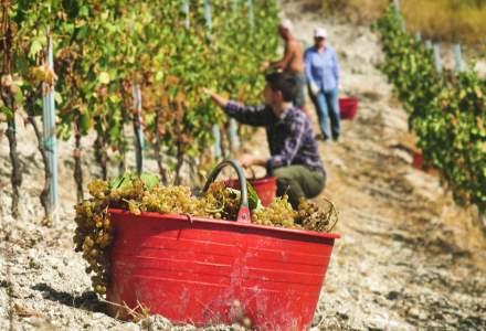 Muncitorii sezonieri români, indispensabili în Italia. Fermierii: Plătim noi testele