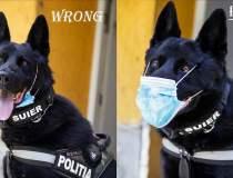 Câinele poliţist Şuier arată...