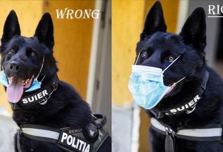 Câinele poliţist Şuier arată cum se poartă corect masca de protecţie. Fotografie virală a Ministerului de Interne