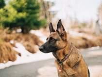 Primul câine testat pozitiv...