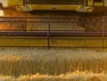 Bursa cerealelor, pregatita...