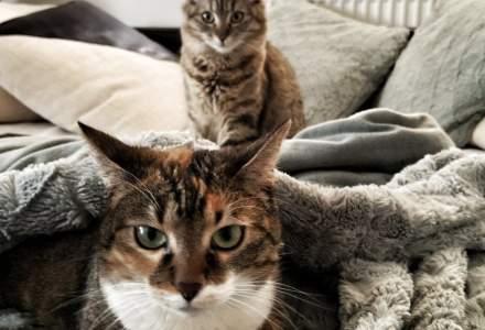 8 august, Ziua Internațională a Pisicii, animalul căruia egiptenii i-au închinat un adevărat cult