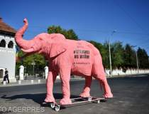 Efefantul roz din fața...