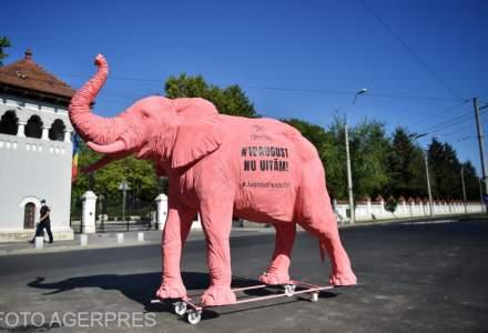 FOTO/ VIDEO Membrii comunității Declic duc un elefant roz la toate instituțiile implicate în ancheta 10 august