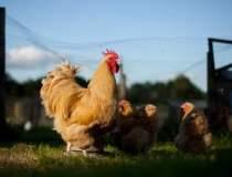 Afaceri agricole: ce ferma...