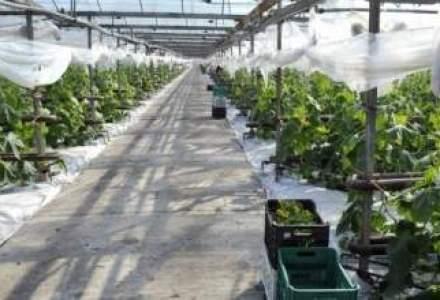 Afaceri cu legume: o alternativa profitabila sau un loz in plic?