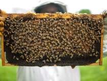Ce fac apicultorii români...