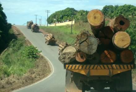 Un pădurar a fost bătut de un hoț de lemne