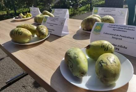 FOTOREPORTAJ în livada cu fructe exotice a Universității de Științe Agronomice și Medicină Veterinară