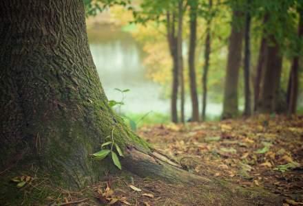 Peste 3,5 hectare de teren vor fi reîmpădurite în județele Mureș și Suceava