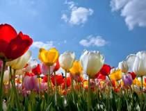 Vacanta printre flori? Cea...