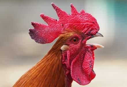 Japonezii au eutanasiat sute de mii de păsări din cauza gripei aviare