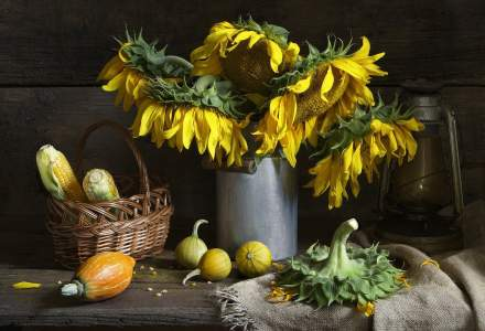 Schimbări climatice: Floarea-soarelui a reînflorit pe câmpurile din Constanța