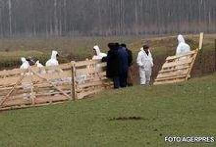 Banca Mondiala vrea sa ajute tarile sarace sa faca fata gripei porcine