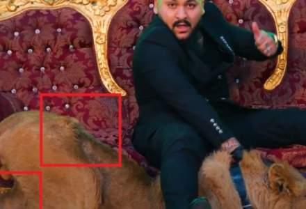 Percheziții la locuința manelistului Dani Mocanu, în urma videoclipului cu leul rănit