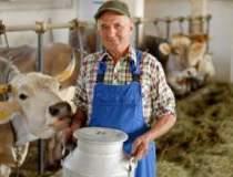Productie mai mare de lapte,...